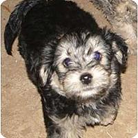 Adopt A Pet :: Thunder - Arlington, TX