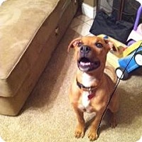 Adopt A Pet :: Kelly,athletic and loving - Sacramento, CA