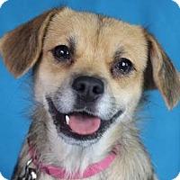 Adopt A Pet :: Coco - Minneapolis, MN