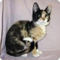 Adopt A Pet :: Kali - Powell, OH