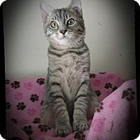 Adopt A Pet :: Peepers & Quackers - Richmond, VA