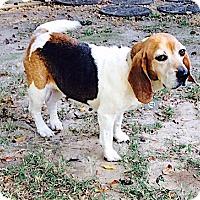 Adopt A Pet :: Ellie May - Houston, TX