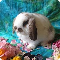 Adopt A Pet :: Walter Albert - Williston, FL