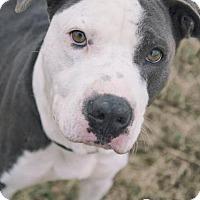 Adopt A Pet :: P.B - Dickinson, TX