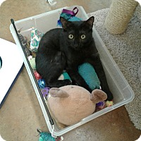 Adopt A Pet :: Blink - Lake Charles, LA