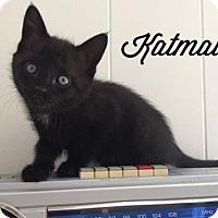 Adopt A Pet :: Katmai - Pendleton, NY