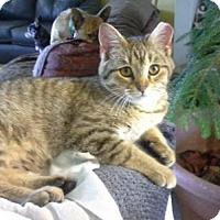 Adopt A Pet :: JC - Salem, NH