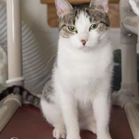 Adopt A Pet :: Jane - Fort Collins, CO
