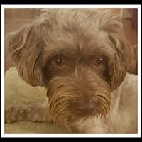 Adopt A Pet :: MARIE - Winchester, CA