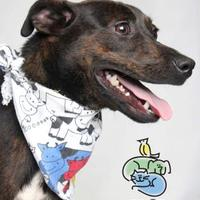 Adopt A Pet :: Samwell Tarly - Knoxville, TN