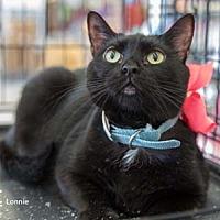 Adopt A Pet :: Lonnie - Merrifield, VA