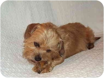 Terrier (Unknown Type, Small) Mix Dog for adoption in Sacramento, California - T Berry