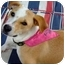 Photo 1 - Basenji Mix Dog for adoption in Miami-Dade and Naples/Ft Myers areas, Florida - SPARKY