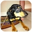 Photo 4 - Hound (Unknown Type)/Coonhound (Unknown Type) Mix Dog for adoption in Baton Rouge, Louisiana - Don Juan