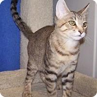 Adopt A Pet :: K-Hart4-Alfred - Colorado Springs, CO
