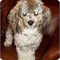 Adopt A Pet :: Kosmo - Tallahassee, FL