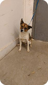 Terrier (Unknown Type, Medium) Mix Dog for adoption in Glenpool, Oklahoma - Arnold