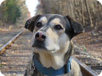 Husky/Shepherd (Unknown Type) Mix Dog for adoption in Richmond, Virginia - Big Kahuna