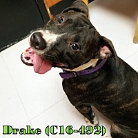 Adopt A Pet :: Drake - Tiffin, OH