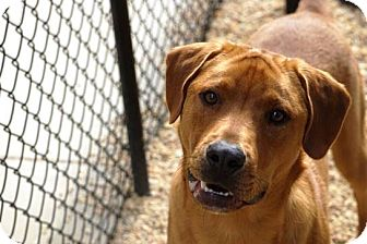 Shepherd (Unknown Type) Mix Dog for adoption in Peace Dale, Rhode Island - Clifford