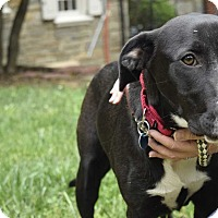 Adopt A Pet :: Harriet (Has Application) - Washington, DC