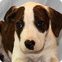 Adopt A Pet :: Sal - Waldorf, MD