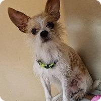 Adopt A Pet :: Reid - Ahoskie, NC