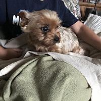 Adopt A Pet :: Bindi - Butler, OH