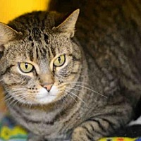 Adopt A Pet :: MUFFY - West Palm Beach, FL