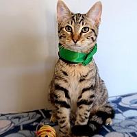 Adopt A Pet :: Clark - Fullerton, CA