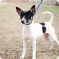 Adopt A Pet :: Chevy - Crawfordville, FL