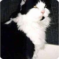 Adopt A Pet :: Boomer - Medway, MA