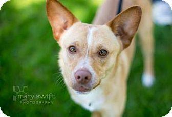 Basenji Mix Dog for adoption in Reisterstown, Maryland - Frank