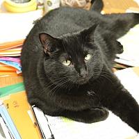 Adopt A Pet :: Tito - Medina, OH