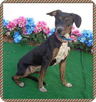 Hound (Unknown Type) Mix Dog for adoption in Marietta, Georgia - ABE