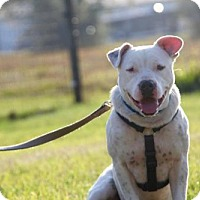 Adopt A Pet :: Jimmy - Williston, FL