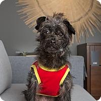 Adopt A Pet :: Maggie - San Francisco, CA