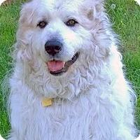 Adopt A Pet :: Budee - Beacon, NY