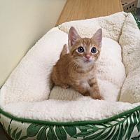 Adopt A Pet :: Zach - Sarasota, FL