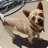 Adopt A Pet :: Lulu - Beavercreek, OH