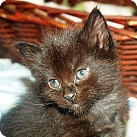 Adopt A Pet :: Katy - Orange, CA