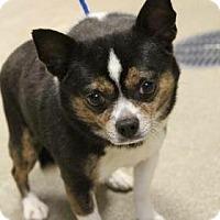 Adopt A Pet :: Jake - Greenville, SC