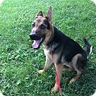 Adopt A Pet :: Asher RBF