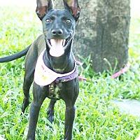 Adopt A Pet :: Nira - Castro Valley, CA