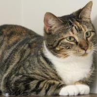Adopt A Pet :: Laura - Thomasville, GA