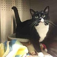 Adopt A Pet :: A646877 - Calgary, AB