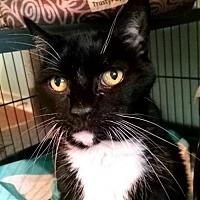 Adopt A Pet :: Rocky - Bealeton, VA