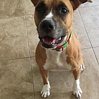 Adopt A Pet :: Bella - Pompano beach, FL