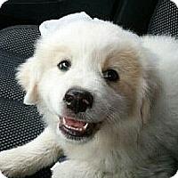 Adopt A Pet :: Baron - Staunton, VA