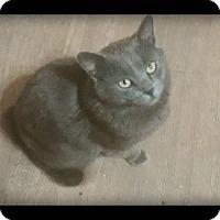 Adopt A Pet :: Blu - london, ON